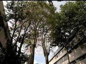 Moradores do Plano Piloto reclamam da demora na poda de árvores - Moradores do Plano Piloto reclamam da demora da Novacap para cortar a vegetação que, muitas vezes, chega a invadir os apartamentos. Eles reclamam que a falta de manutenção causa prejuízos.