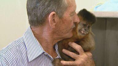 'Guarda' de macaco pode parar na Justiça em Ituverava, SP - Animal passou 37 anos com uma família, mas acabou apreendido pela Polícia Ambiental.