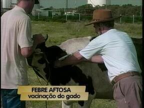 Começa a vacinação contra a febre aftosa no RS - Em Rio Grande, 140 mil bovinos devem ser vacinados.