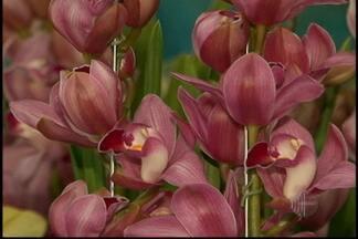 Floriculturas têm grande movimento na véspera de Dia das Mães - Na região, as floriculturas ficaram movimentados por causa do Dia das Mães neste domingo (12). Os comércios estendem o horário de funcionamento para atender a população.
