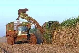 Cana-de-açúcar em Mato Grosso do Sul deve liderar o crescimento do setor no Brasil - O assunto foi destaque na noite desta quarta-feira durante as atividades da semana da indústria.