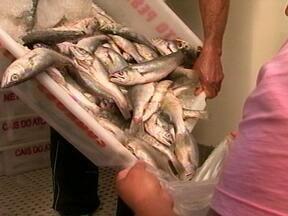 80 toneladas de pescado são apreendidas em Rio Grande - Peixes foram capturados de maneira irregular.