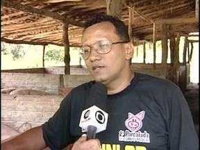 Competição para quem consegue derrubar porcos aconteceu em Campo Maior - O evento ainda contou com exposição de animais, gastronomia e até corrida de porcos em uma disputa bastante animada.