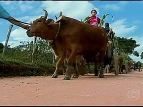 Desfile de carros de boi é destaque na festa do milho em Santana dos Montes (MG) - Um desfile de carros de boi e um festival de receitas tradicionais foram os destaques da festa do milho em Santana dos Montes. O cultivo do grão é importante fonte de renda na região.