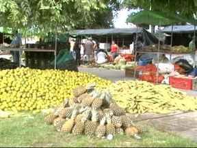 Feira em Maceió vende a produção dos assentamentos direto ao consumidor - A Feira Camponesa virou tradição na capital de Alagoas.
