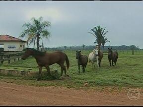 Caso de mormo deixa criadores de cavalo de Rondônia em alerta - O primeiro caso da doença foi detectada em uma propriedade rural de Cujubim, na região Norte do estado. Para evitar que o mormo se alastre, vários cuidados foram tomados.