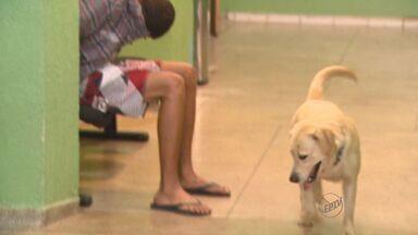Labrador ajuda a PM a apreender drogas em Ribeirão Preto - Dois adolescentes suspeitos de tráfico foram detidos.