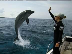 Curaçao - Equipe do Globo Mar mergulha com golfinhos no mar do Caribe. Mar do Caribe encanta com suas águas cristalinas.