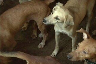 Veja como são tratados os animais recolhidos nas ruas de Bacabal - Saiba também o que acontece com eles quando os donos não aparecem para buscá-los.