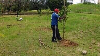 Prefeitura faz replantio de árvores cortadas no Cocó - Árvores foram derrubadas para obra de viaduto.