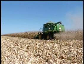 Estimativa para segunda safra de milho deve aumentar em 12% no Tocantins - A estimativa para segunda safra de milho deve aumentar em 12% no Tocantins