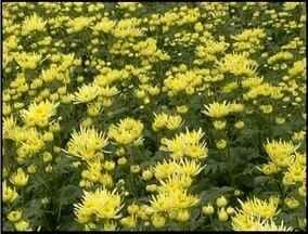 Produtores de flores de Friburgo, RJ, receberam alunos de agronomia - Alunos foram ver na prática como funcionam as teorias aprendidas em sala de aula.
