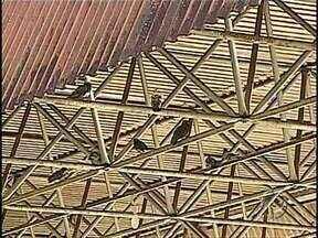 Usuários do terminal de Irerê reclamam da sujeira deixada pelos pombos no local - Além do Bosque e das praças municipais, já povoados pelos pombos, outros pontos da cidade estão infestados. No terminal de Irerê é preciso tomar cuidado para não ser alvo da sujeira deixada pelos bichos.