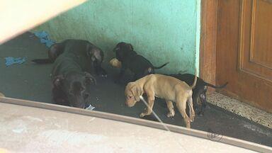 Morador de Ribeirão Preto é multado por manter animais de estimação em situação precária - Valor a ser pago é de R$ 6 mil.