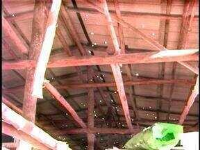 Granizo causa prejuízos em propriedades rurais de Itatiba do Sul, RS - Pés de fumo foram destruídos.
