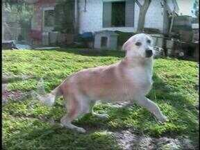 Abandono de animais em Erechim, RS, preocupa - Castração é uma das soluções para evitar o problema.