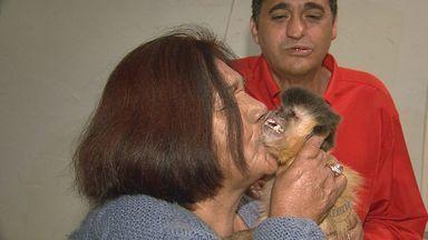 Macaco prego volta para casa em São Carlos após um mês - Quase 20 mil pessoas participaram de abaixo-assinado na internet.