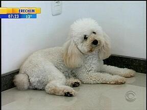 Terapia Comportamental Canina busca o equilíbrio entre o homem e o animal - Terapia é uma das maneiras de corrigir os problemas de comportamento, mesmo em cães que já foram adestrados.
