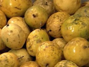 Venda da polpa de maracujá traz mais lucro que venda da fruta in natura - Luiz Flávio Ribeiro, de Itaguara, MG, escreve pedindo informações sobre o processo de beneficiamento do maracujá.