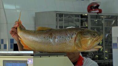 Na semana dedicada ao peixe o preço do pescado fica mais barato em MS - Peixe com preço mais barato. Na semana organizada pelo Governo Federal para promover o consumo do pescado, o valor pago pelo quilo chegou a cair 40% em Campo Grande.
