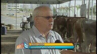 Termina hoje o maior seminário da agropecuária do Nordeste - Evento discute convivência com a seca na região.