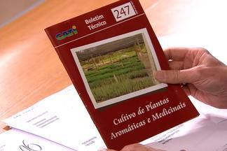Publicação tem dicas sobre plantação de temperos e ervas - Cultivo de Plantas Aromáticas é uma publicação da Cordenadoria de Assitência Técnica de São Paulo. O livro custa R$ 10.