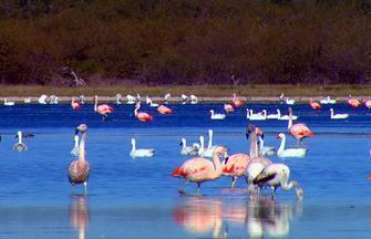 Terra da Gente - Chaco Paraguaio - Bloco 02 - O Terra da Gente deste sábado (21) cruza a fronteira para explorar as belezas naturais de um dos nossos vizinhos, o Paraguai. Vamos mostrar um lado pouco conhecido do país: áreas preservadas, cheias de bichos. É o Chaco Paraguaio,