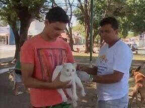 Campanha de vacinação antirrábica acontece hoje em Teresina - Mais de 100 mil cães e gatos devem ser vacinados hoje.