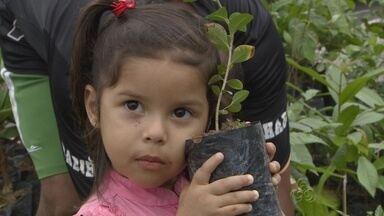 Centenas de mudas são distribuídas e plantadas no Dia da Árvore, em Manaus - Programação foi realizada na Zona Sul da capital.