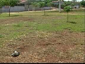 Polícia de Meio Ambiente de Ituiutaba investiga morte de pombos no Centro da cidade - Dezenas de animais mortos foram encontradas ao longo de uma das principais avenidas na cidade.