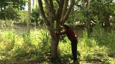 No Dia da Árvore, o ALTV mostra um empresário que dedica parte da vida às plantas - Ele cultiva desde os anos 70 mudas de Pau Brasil.