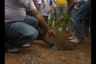 Projeto de arborização foi até as margens do açude de Boqueirão, em CG - Veja o trabalho dessa turminha.