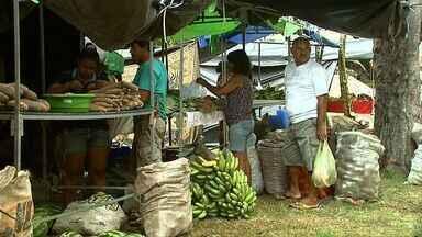 Feira Camponesa atrai consumidores em Maceió - O evento começa hoje na Praça da Faculdade. Boa oportunidade para quem gosta de comprar produtos sem agrotóxicos.