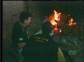 Polícia de Gurupi incinera cerca de 300 quilos de maconha em uma olaria - Polícia de Gurupi incinera cerca de 300 quilos de maconha em uma olaria