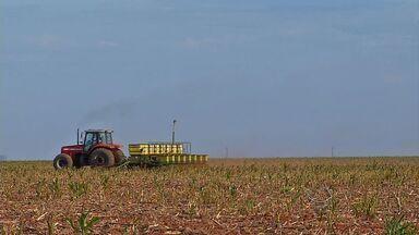 Plantio de soja avança no estado de Mato Grosso - Plantio já chegou a metade da área prevista, eliminando o atraso com relação a safra passada