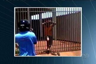 Ao tentar roubar casa, homem fica preso às grades do portão, em Rio Verde - Um homem que tentou roubar uma casa em Rio Verde não estava com sorte. Além do imóvel estar desocupado e vazio, na fuga, ele acabou preso à grade do portão, facilitando o trabalho da polícia.