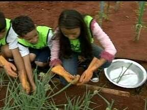 Projeto ensina alunos a ter alimentação saudável - A iniciativa que tem o apoio da Emater, é desenvolvida com sucesso em 10 colégios de Sobradinho.
