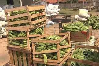 PAA reinicia em Santarém - O programa do Governo Federal compra produtos da Agricultura Familiar para atender projetos sociais