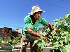 Na zona norte do RJ, horta em favela envolve obra de infraestrutura pública - Em Manguinhos, foi realizada uma obra de infraestrutura pública com investimento de R$ 80 milhões. A horta teve um custo de R$ 500 mil e causou grande impacto na comunidade.