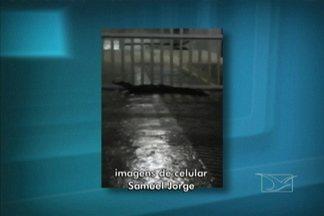 Jacaré foi flagrado tentando entrar na garagem de um prédio, na Lagoa da Jansen - Veja no vídeo.