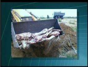 Carne irregular é apreendia em São Francisco de Itabapoana, RJ - Animal teria sido abatido clandestinamente.Comerciante teve que prestar esclarecimentos.