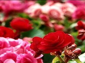 No RS, a floricultura movimenta a economia no Vale do Rio Pardo - Santa Cruz do Sul, RS, já tentou se transformar na Holambra dos gaúchos.