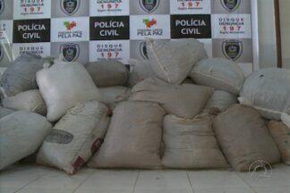 Pesagem da droga apreendida no Cariri chega a quase três toneladas - O IPC pesou oficialmente a droga apreendida em Monteiro, no Cariri do Estado.