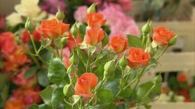 Produção de flores aumenta 30% nos últimos três anos em Itapeva - Produção de flores aumenta 30% nos últimos três anos em Itapeva