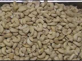 Produção de castanha do caju orgânica apresenta vantagens para produtores - Produtores do Ceará que receberam a certificação de produto orgânico comemoram as vantagens de entrar nesse mercado. Para se manter no setor, é necessário investimento, já que o consumidor é exigente.