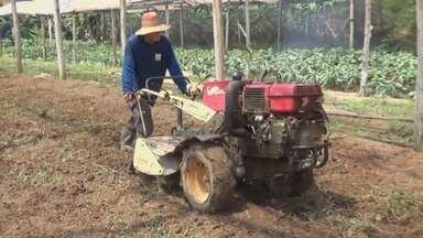 Agricultor consegue aumentar produção e passa a abastecer município do AM com horticultura - Iniciativa gera emprego e renda em Nova Olinda do Norte.