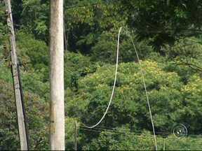 Vento derruba fio de alta tensão e mata dois cachorros eletrocutados em Jundiaí - A ventania desta terça-feira (19) derrubou um fio de alta tensão em Jundiaí (SP) e matou dois cachorros eletrocutados. A área foi isolada.