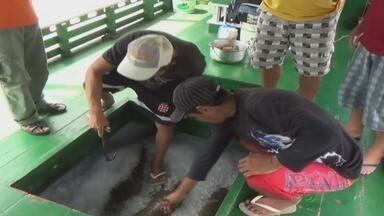 Despesca no Rio Purus beneficia comunidades em Beruri-AM - Ação ocorre em áreas de manejo.
