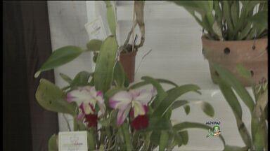 Confira as dicas para cultivar as orquídeas - O Festival das Orquídeas acontece na Casa José de Alencar.