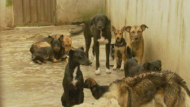 ONG registra ocorrëncia de maus-tratos a animais no Canil de Ipuiúna (MG) - ONG registra ocorrëncia de maus-tratos a animais no Canil de Ipuiúna (MG)
